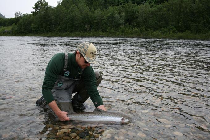 Per releases his salmon.